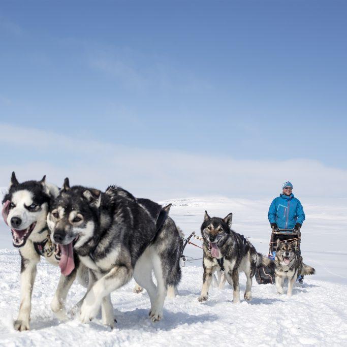 Multiaktiv-Winterwoche in Lappland (FIH3)