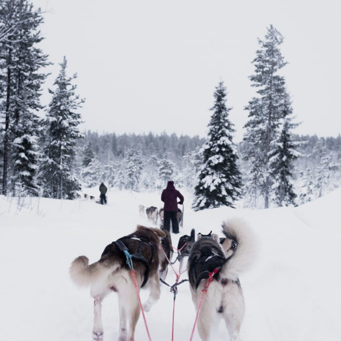 Husky Wildnis-Safari in Lappland
