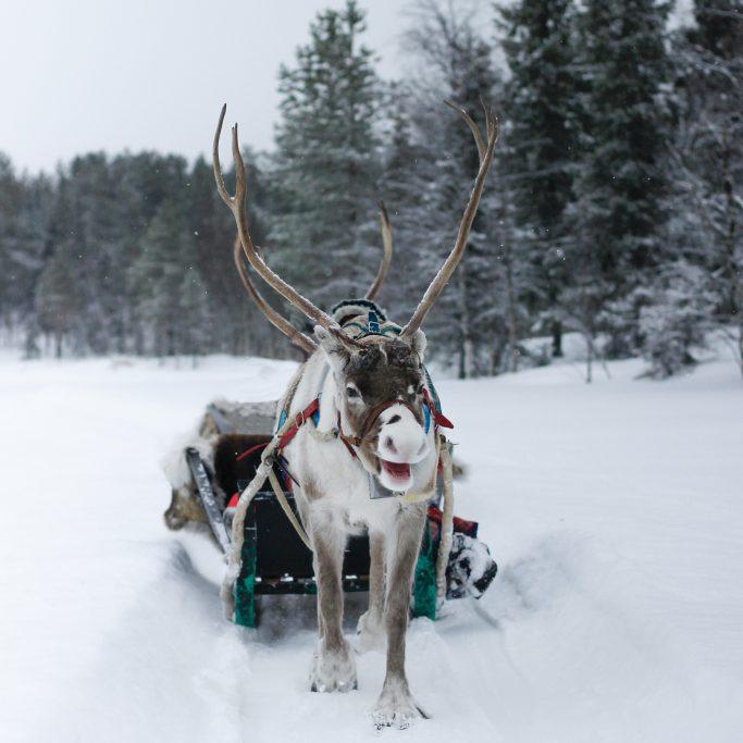 Familien-Winterwoche am Polarkreis