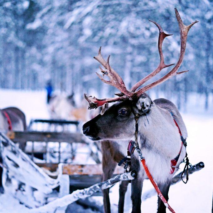 Winter-Wunderland Iso Syöte (FI5)