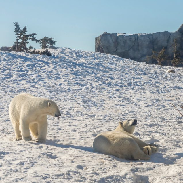 Schiffsreise | Spitzbergen für Einsteiger (NOS2)