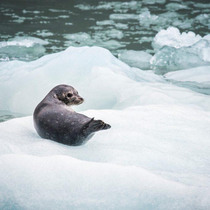Schiffsreise | Expedition rund um Spitzbergen