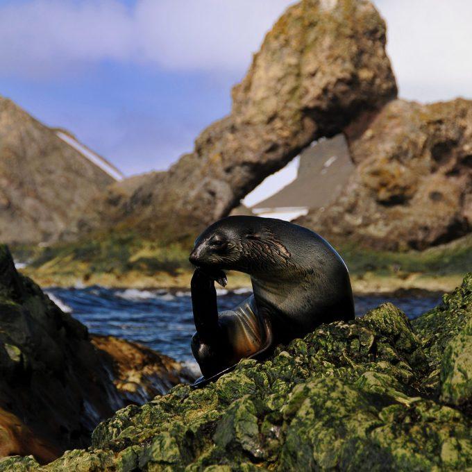 Antarktis und Falklandinseln - Kurs Süd (ANH1)