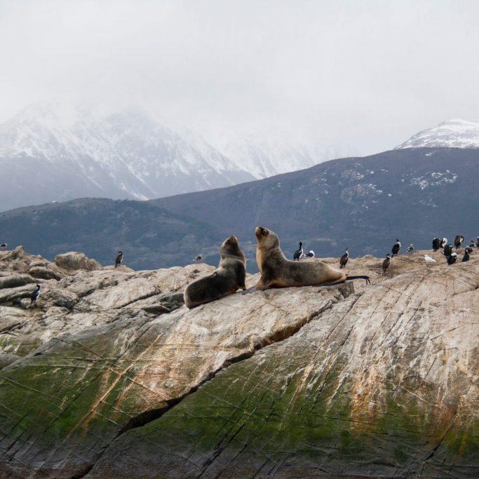 Schiffsreise | Antarktis, Falklandinseln und Südgeorgien (ANH3)
